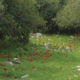 Discover biodiversity in the Ajloun forest