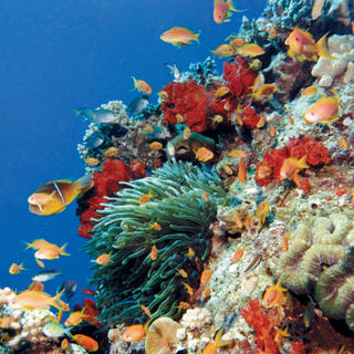 Scuba diving in Aqaba