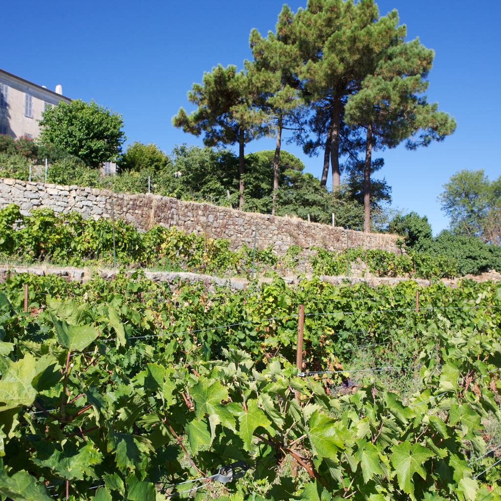 Clos Antonini, a refreshing break