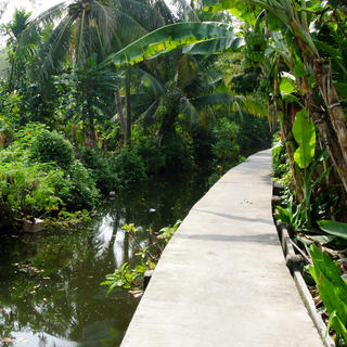Bang Kachao: the jungle, only a few kilometres from Bangkok