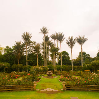 The Botanical Garden: floral observatory