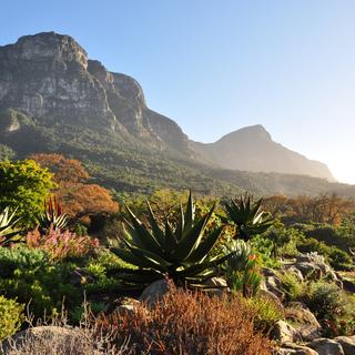 Kirstenbosch Botanical Garden, suspended between sky and sea.