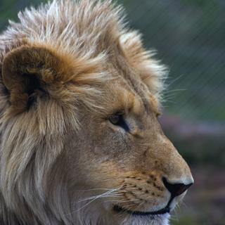 Panthera Africa: a 'big cat sanctuary'