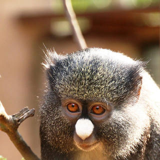 Limbe Wildlife Centre: out to protect nature
