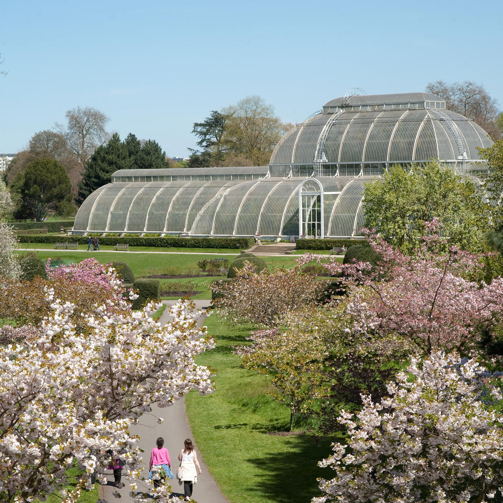 Kew Gardens: flowers for the Queen