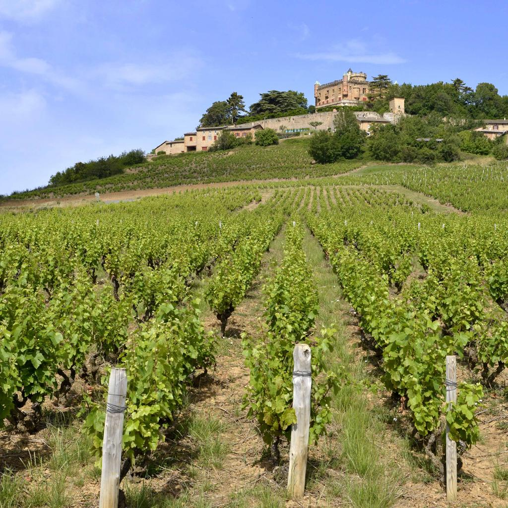 The vineyards of Beaujolais