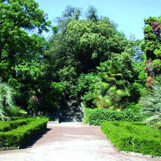 The Botanical Garden: quiet and lush in the city centre