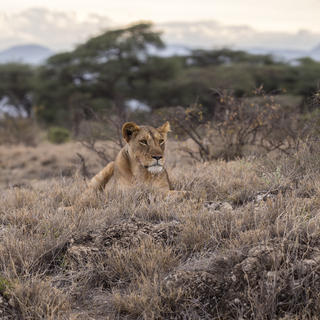 Serengeti and Tsavo East, Kenya's jewels