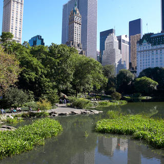 Central Park: the lungs of Manhattan