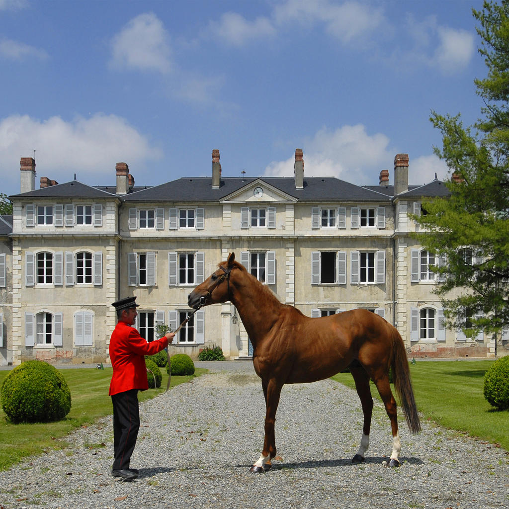 The National Stud Farm: the world's finest horses