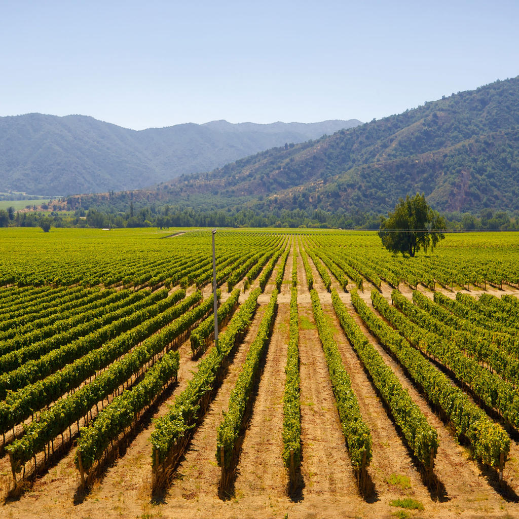 Colchagua Valley: a stop on the wine road