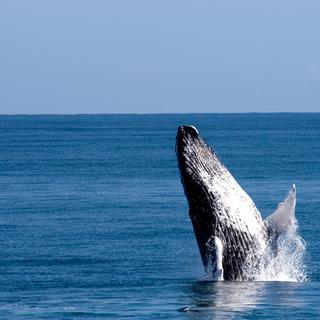 Whale sanctuary: four hours at sea with a whale expert