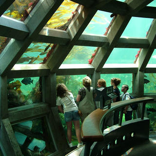 Visit the Seattle Aquarium with Little Ones