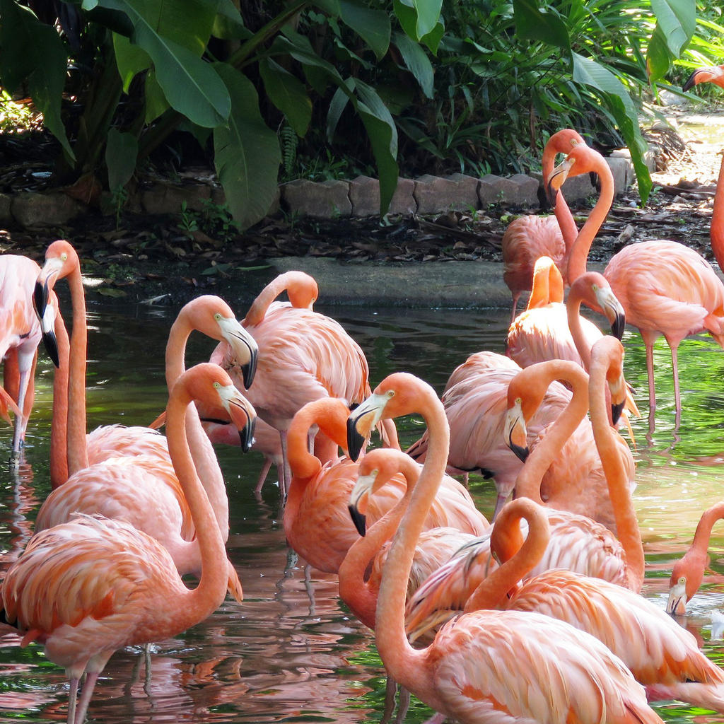Jurong Bird Park: an educational family getaway
