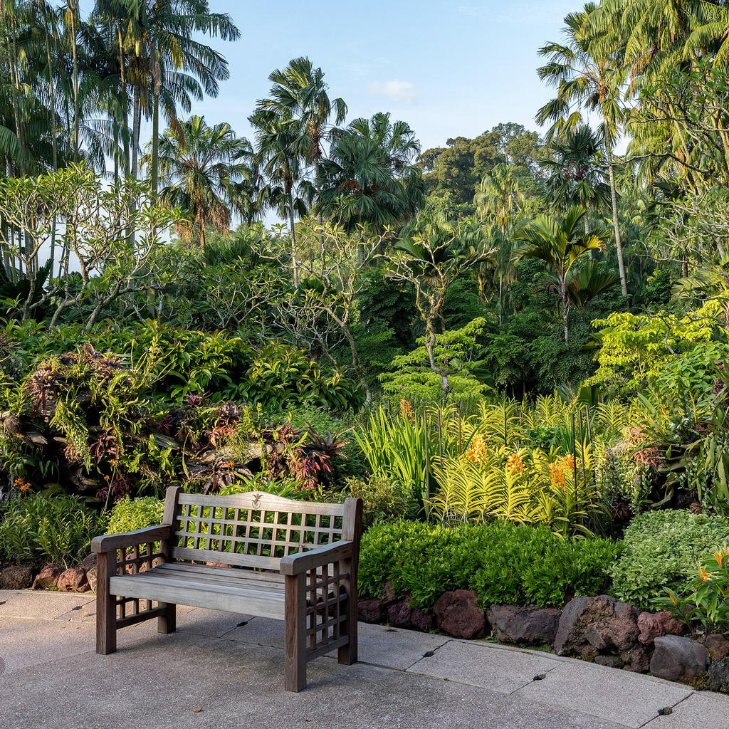 Singapore Botanic Gardens: a green jewel in the city's heart