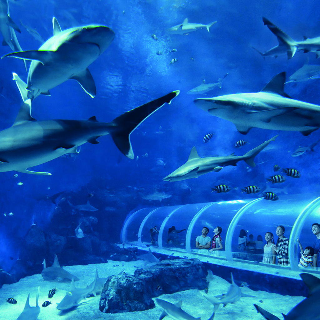 S.E.A. Aquarium: an aquatic dip in the seabeds of the world