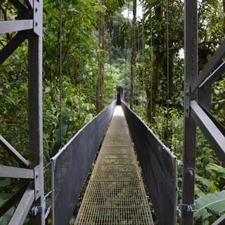 Tours of the rainforest canopy in Monteverde