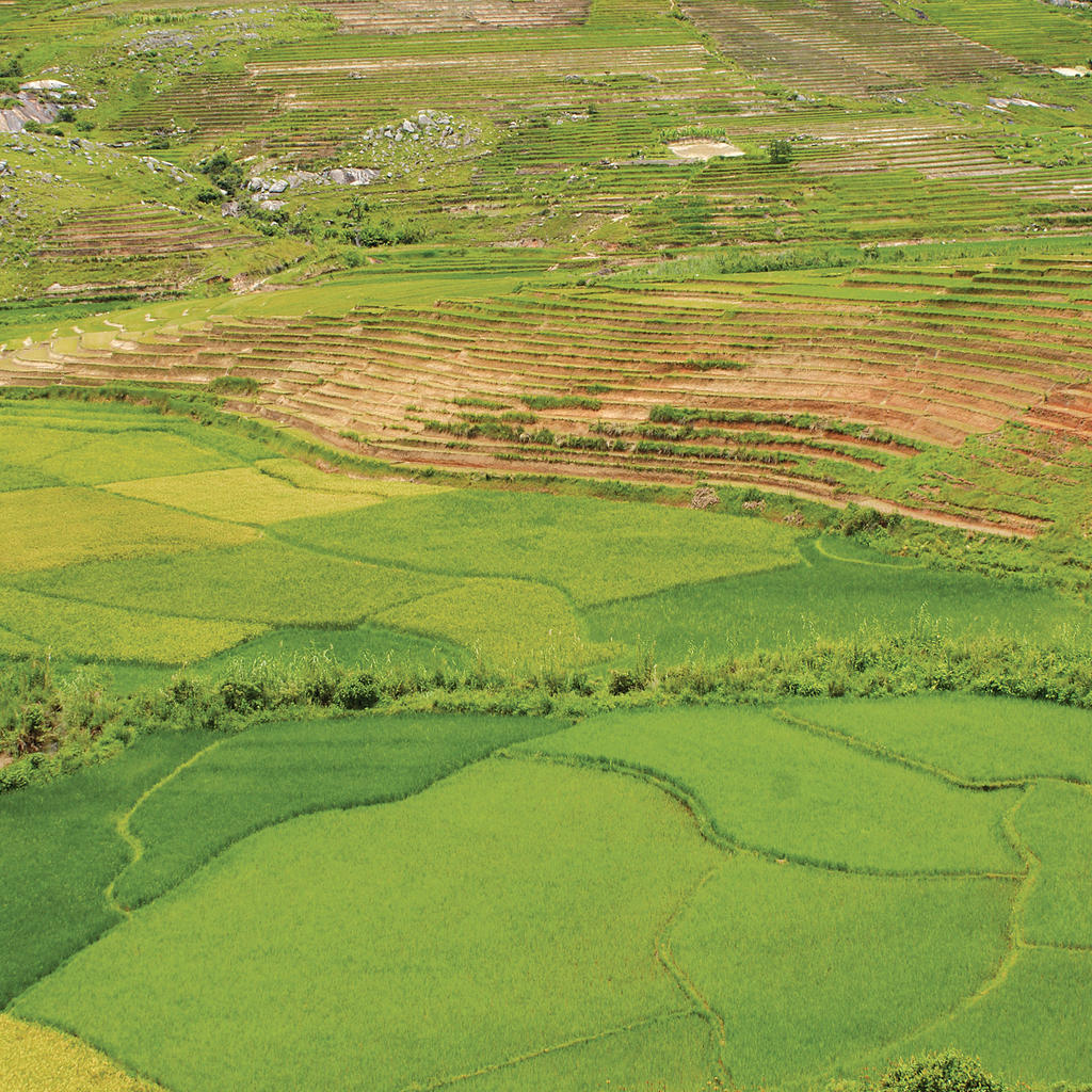 Malagasy rice paddies: natural beauties of the island