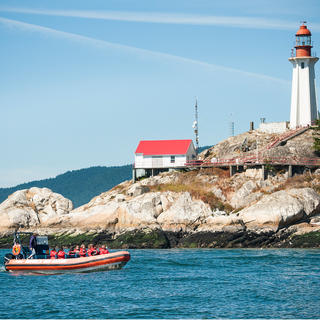 Set sail for a sea safari in Vancouver